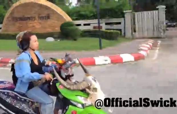 Trained Pet Bird To Fly With Motorcycle