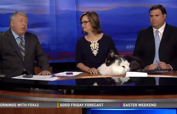 Bunny Sex On The Evening News